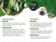 Simple Bi-fold Green Brochure
